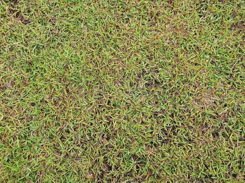 Struttura dell'erba verde per il progettista fotografia stock libera da diritti