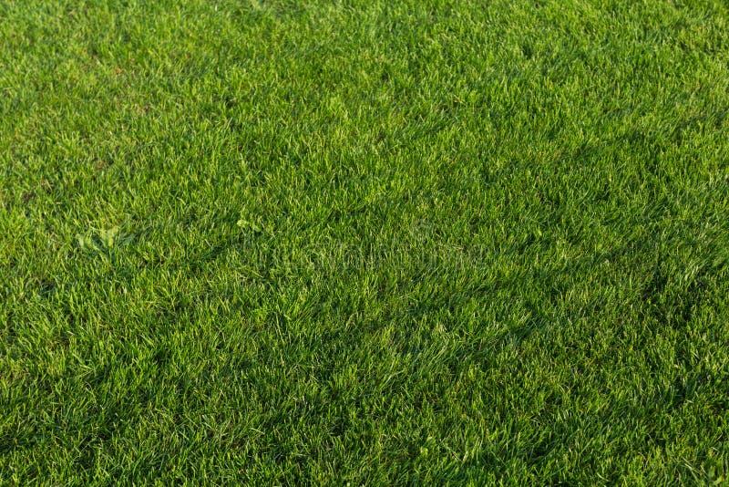 Struttura dell'erba verde per priorit? bassa immagine stock