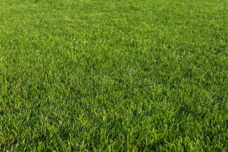 Struttura dell'erba verde per priorit? bassa fotografia stock libera da diritti