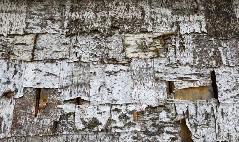 Struttura della corteccia di albero della betulla fotografia stock libera da diritti