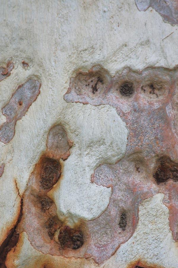 Struttura della corteccia di albero con i bei collors naturali fotografie stock libere da diritti