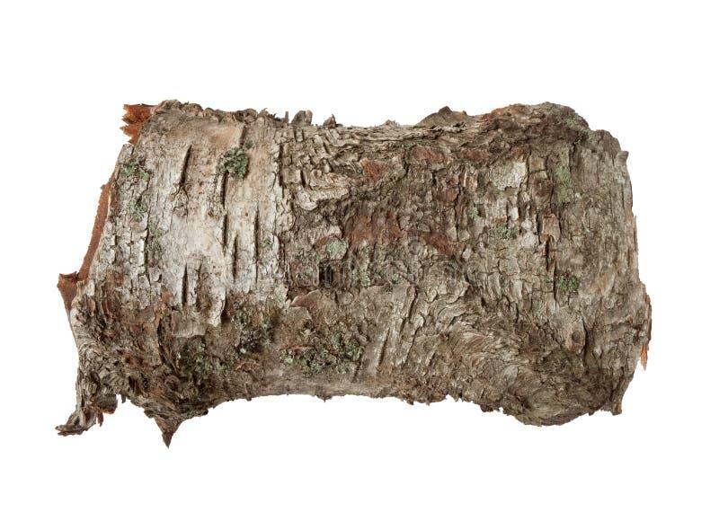 Struttura della corteccia di albero della betulla immagini stock libere da diritti