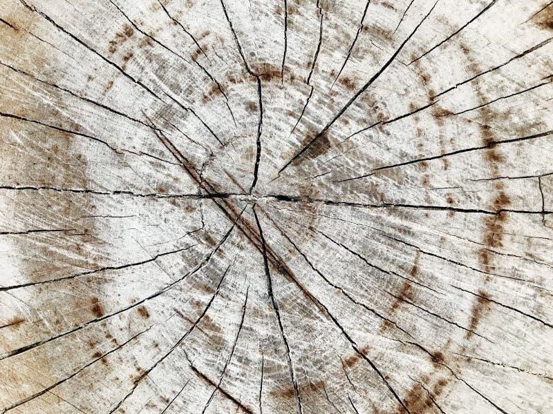 Struttura della corteccia di pino e fondo, fine sulla vista del modello naturale ed organico della corteccia del pino immagine stock
