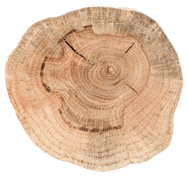 Struttura della fetta della quercia Lastra di legno di forma irregolare con il ri annuale fotografie stock libere da diritti