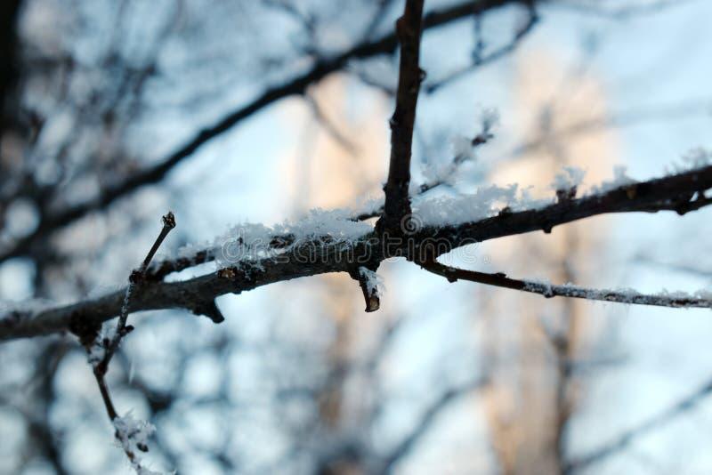 Struttura della fine del gelo - sui rami di albero neri e sulla neve bianca, fros del pizzo di inverno fotografia stock libera da diritti