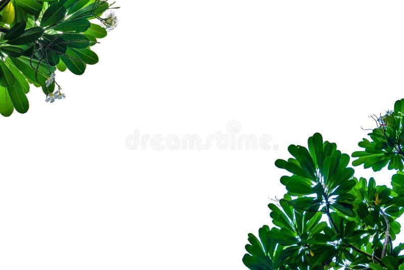 Struttura della foglia e del fiore con fondo bianco fotografia stock libera da diritti