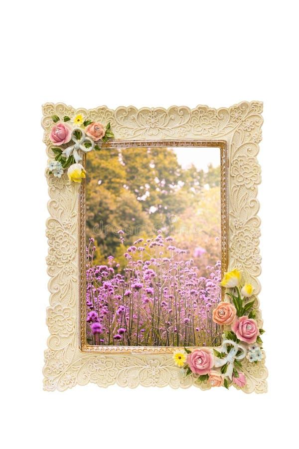 Struttura della foto con struttura rosa intorno al confine isolato su bianco e su interno con la natura variopinta del prato dei  fotografie stock