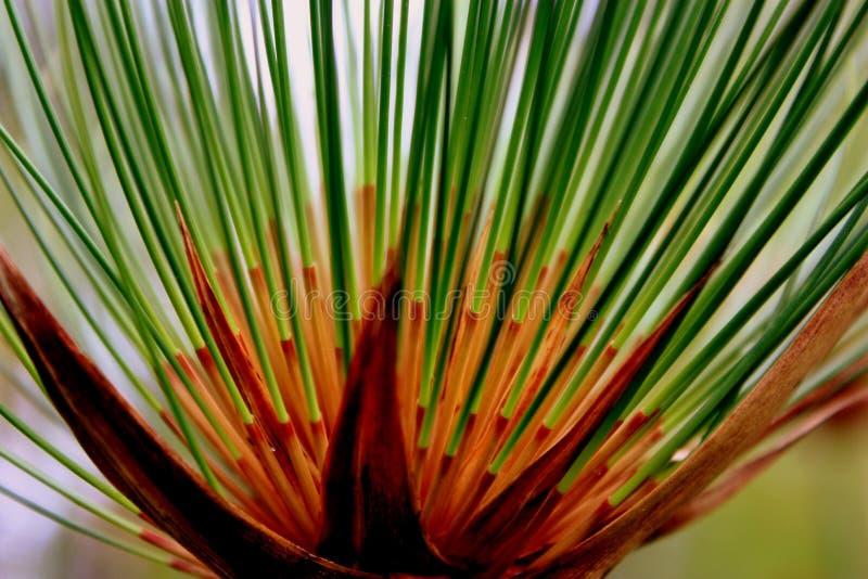 Struttura della natura e di verde fotografia stock