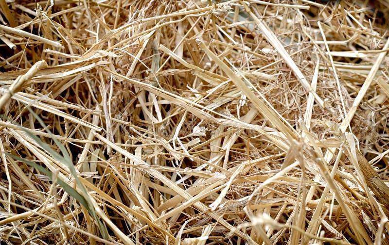Struttura della paglia, fondo, lavoro dell'azienda agricola fotografie stock