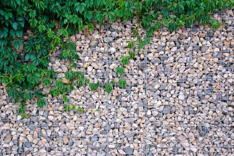 Struttura della parete di pietra con le foglie verdi immagini stock