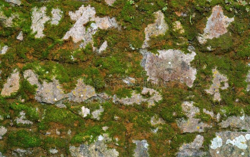 Struttura della parete di pietra grigia coperta di lichene e di muschio immagini stock libere da diritti