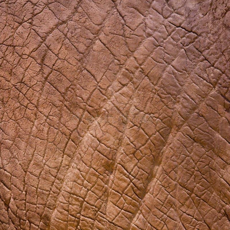 Struttura della pelle dell'elefante fotografia stock