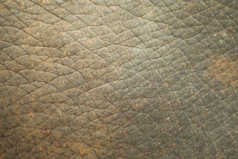 Struttura della pelle dell'elefante fotografie stock libere da diritti