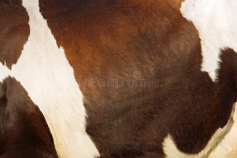 Struttura della pelle della mucca fotografie stock