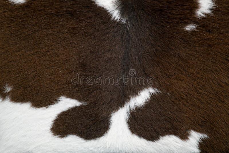 Struttura della pelle della mucca fotografia stock