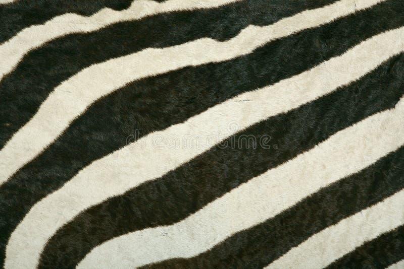 Struttura della pelle della zebra di montagna fotografie stock libere da diritti