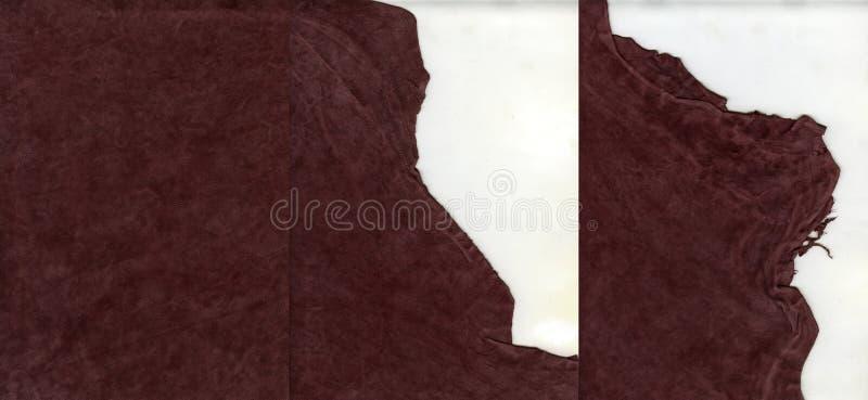 Struttura della pelle scamosciato con i bordi lacerati fotografia stock libera da diritti