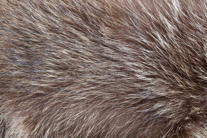 Struttura della pelliccia fotografie stock