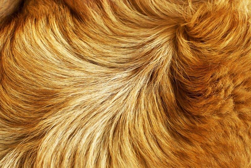 Struttura della pelliccia fotografia stock