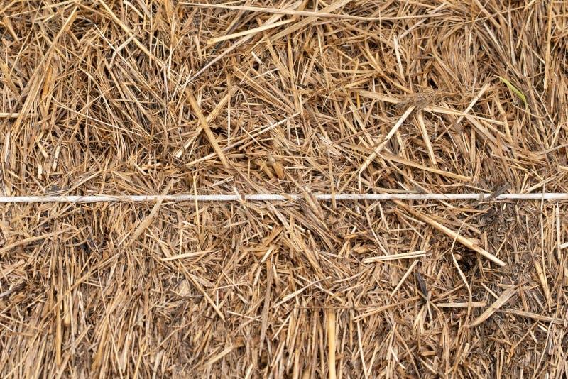 Struttura della pila di fieno nella fine su immagine stock