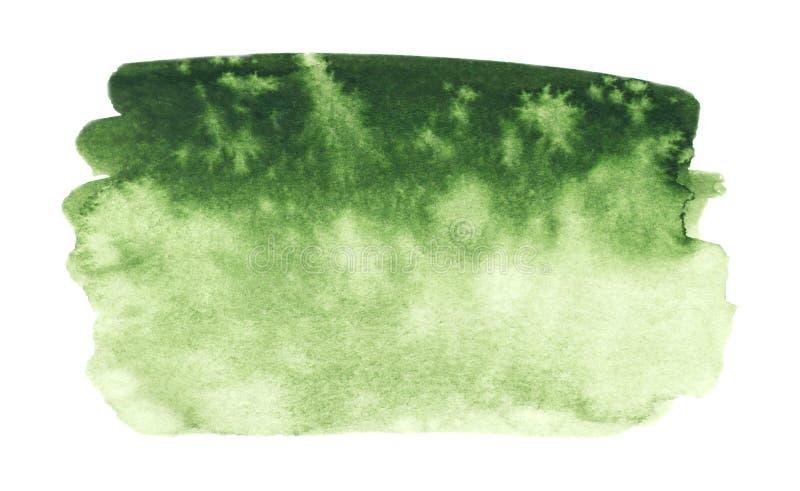 Struttura della pittura di verde di vettore isolata sull'insegna bianco- dell'acquerello per la vostra progettazione royalty illustrazione gratis