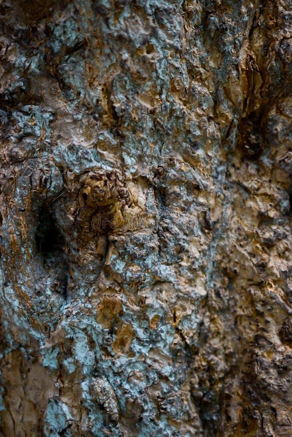 Struttura della priorità bassa della corteccia di albero Vecchi di legno asciugano la corteccia dell'albero fotografie stock