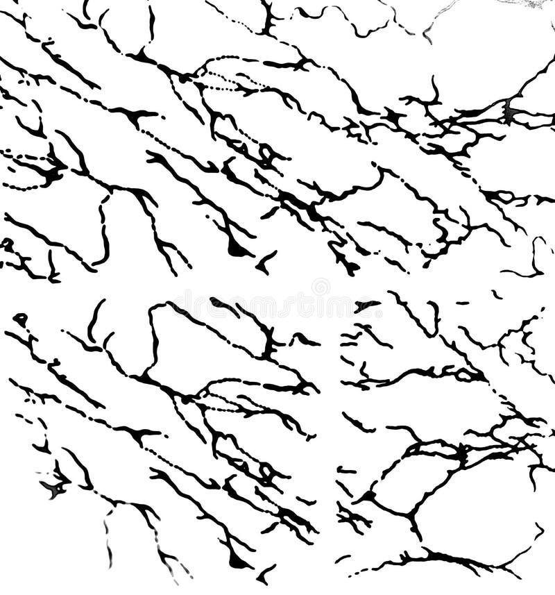 Struttura della radice dell'albero in bianco e nero illustrazione vettoriale