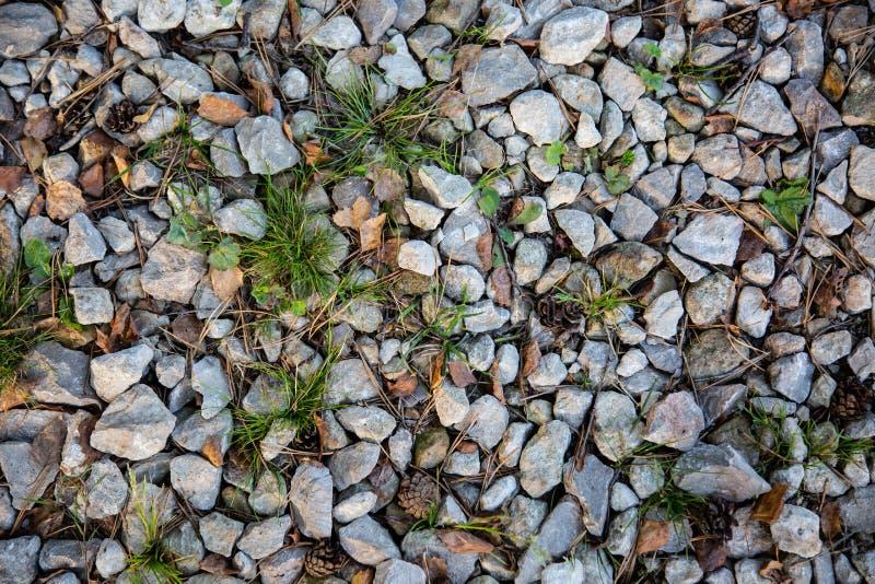 Struttura della strada della ghiaia del paese con erba, aghi di legno, coni, fal immagini stock libere da diritti
