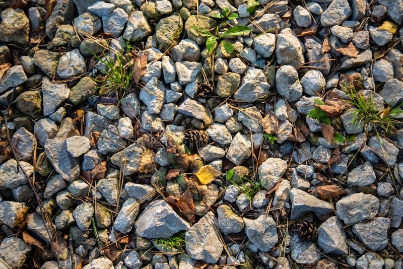 Struttura della strada della ghiaia del paese con erba, gli aghi di legno ed i coni fotografie stock libere da diritti