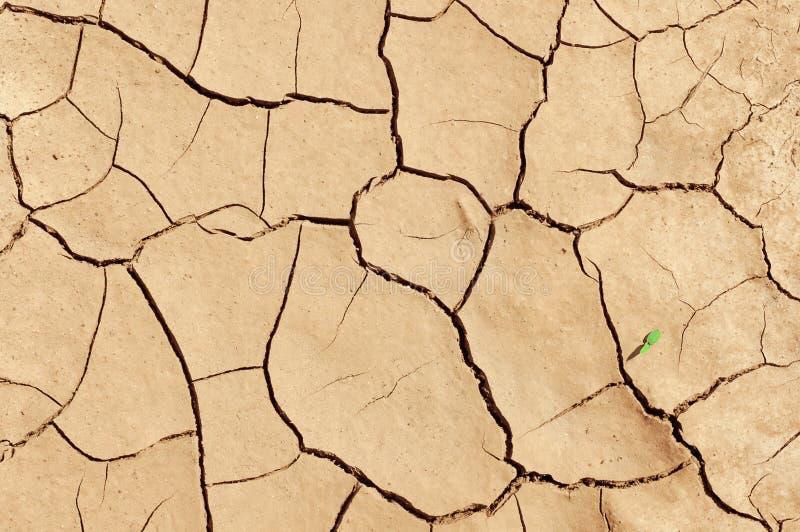 Struttura della terra che ha incrinato da un calore fotografia stock libera da diritti