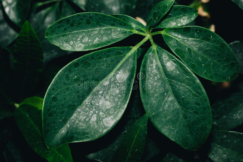 Struttura di alta risoluzione del fondo delle foglie verdi immagine stock libera da diritti