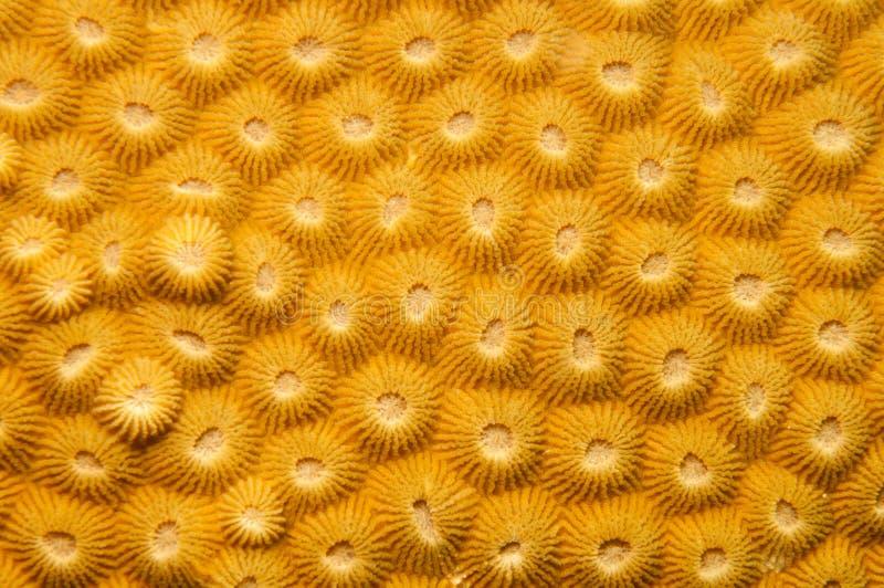 Struttura di corallo compatta fotografia stock libera da diritti