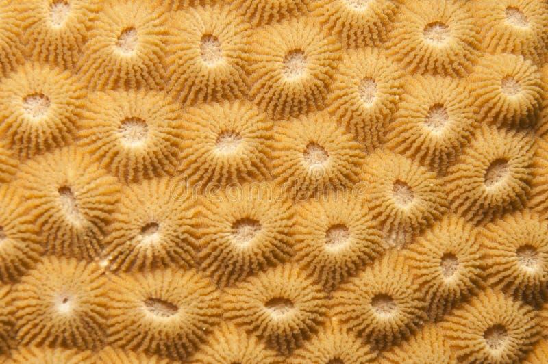 Struttura di corallo compatta fotografie stock