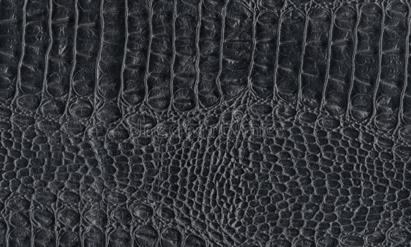 Struttura di cuoio naturale del rettile nero Modello della pelle del serpente, del coccodrillo o del drago fotografia stock
