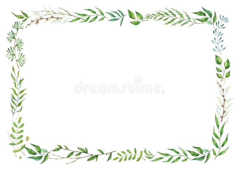 Struttura di erbe di vettore della miscela Piante, rami e foglie dipinti a mano su fondo bianco Progettazione di carta naturale illustrazione vettoriale