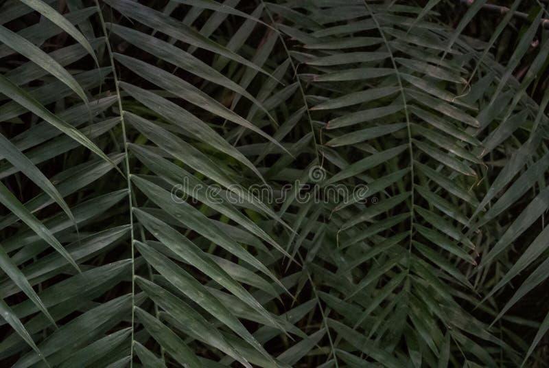 Struttura di foglia di palma fotografia stock libera da diritti