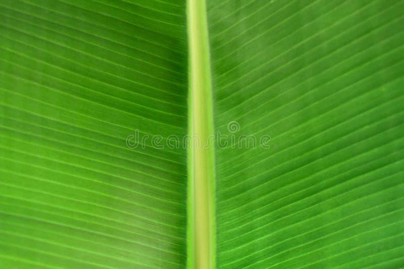 Struttura di foglia di palma verde fotografie stock libere da diritti