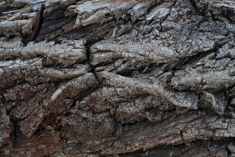 Struttura di legno 2 fotografia stock