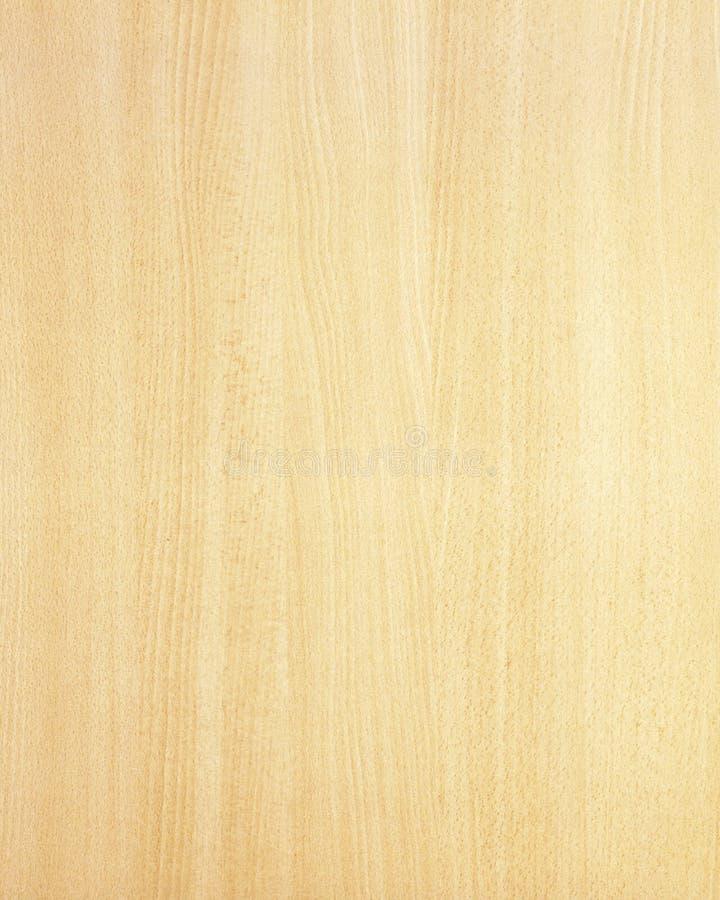 Struttura di legno background_beech_16 fotografie stock libere da diritti