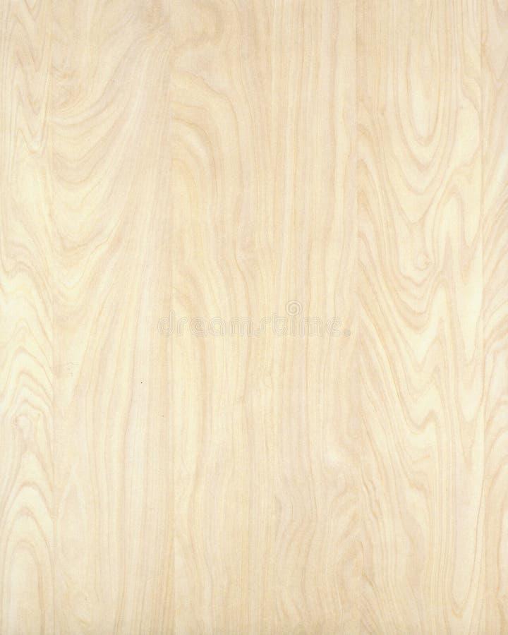 Struttura di legno background_birch_10 fotografie stock