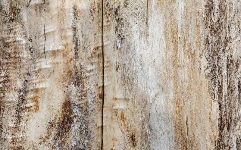 Struttura di legno beige, pioppo, fondo fotografia stock