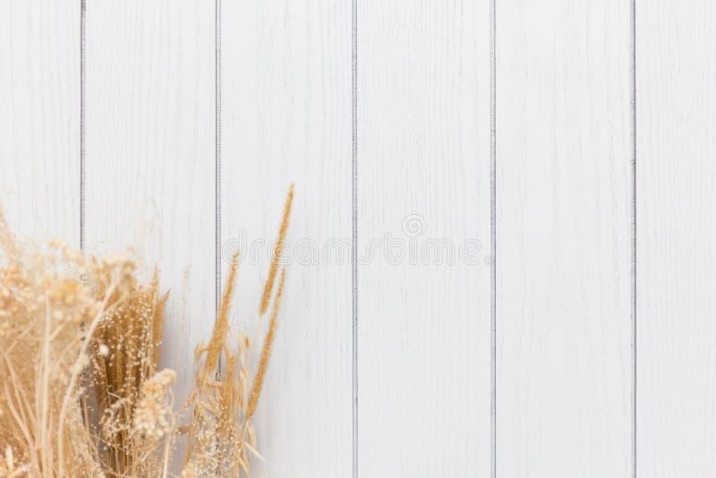 Struttura di legno bianca e fondo asciutto del fiore immagini stock libere da diritti