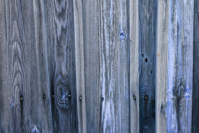 Struttura di legno blu di vecchio legno con i nodi, plance fotografia stock