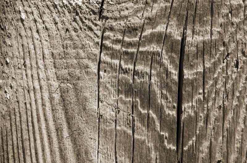 Struttura di legno chiara sottragga la priorità bassa fotografie stock libere da diritti