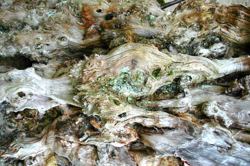 Struttura di legno complessa sul tronco di albero morto fotografia stock
