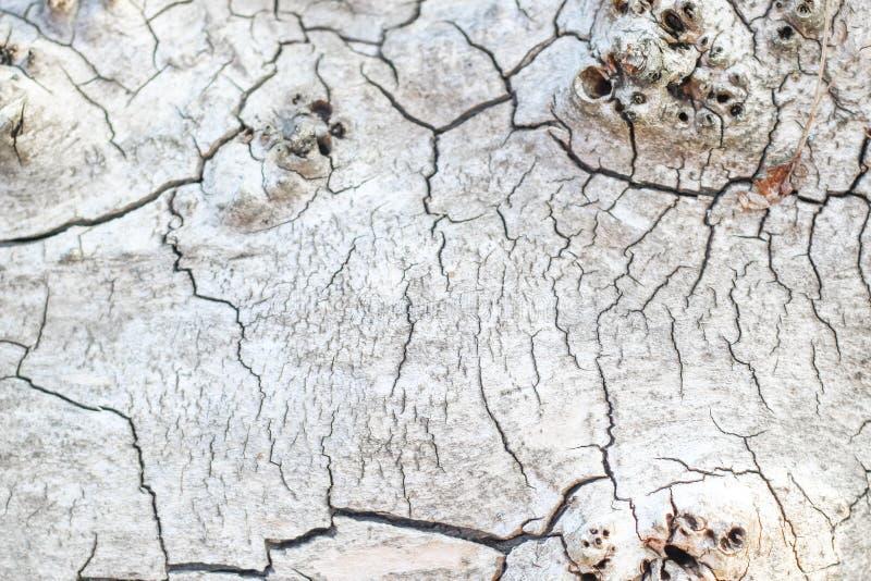 Struttura di legno con le crepe, legno tagliato immagini stock