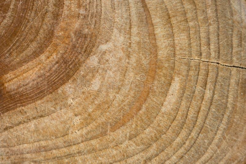 Struttura di legno del ceppo, tronco di albero cutted fotografia stock libera da diritti