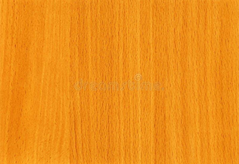 Struttura di legno del faggio del HQ a priorità bassa fotografie stock