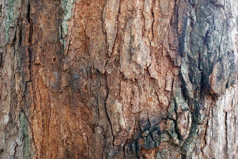 Struttura di legno del fondo della corteccia fotografia stock