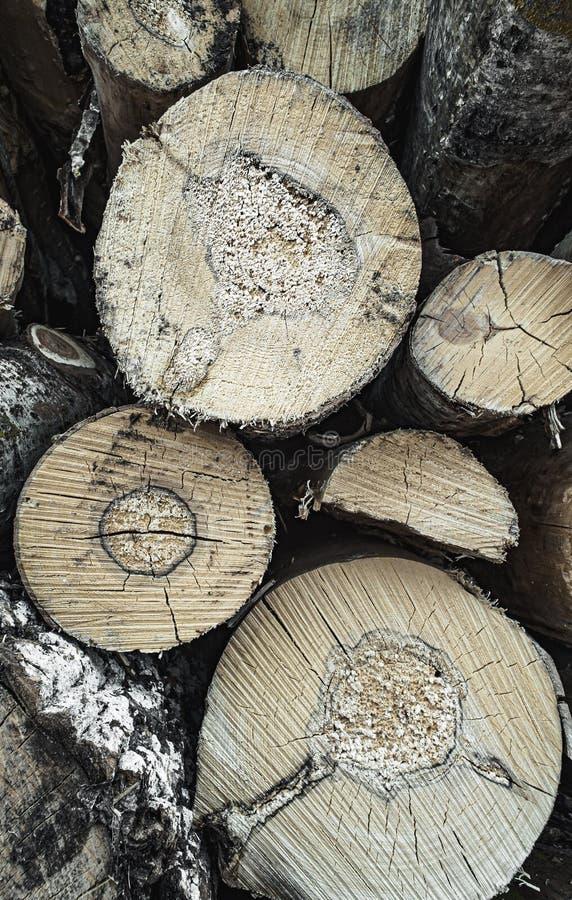 Struttura di legno del modello ondulato dell'anello da una fetta di albero Ceppo di legno tremula betulla conifero immagini stock libere da diritti